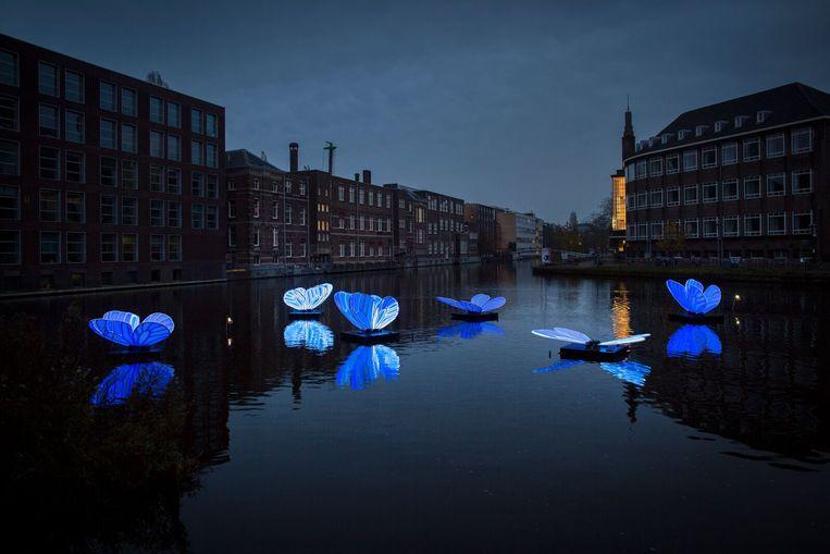Butterfly Effect. Beeld Amsterdam Light festival