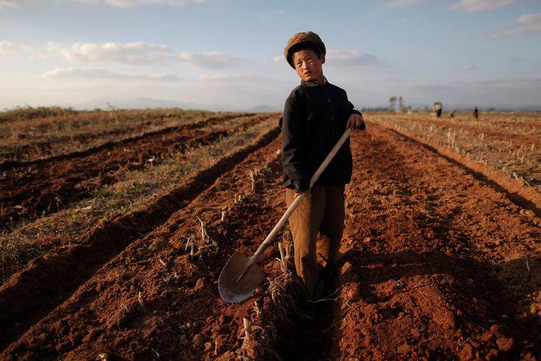 Een collectieve boerderij in de provincie South Hwanghae die in 2011 werd getroffen door overstromingen.  Beeld Reuters