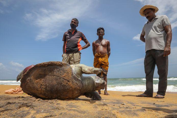 Sri Lankaanse burgers bij een aangespoelde dode schildpad in het zand.