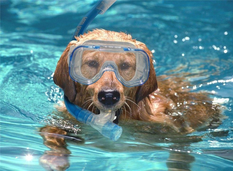 Hondenzwemmen in Boschbad Apeldoorn