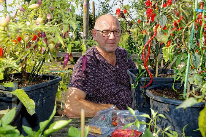 Adri Kivits tussen zijn peperplanten in zijn volkstuin.