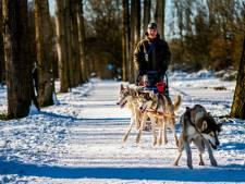 Lapland? Nee, Hitland! Husky's Achak, Sestro en Zeno zijn de sterren in Nieuwerkerkse sneeuw