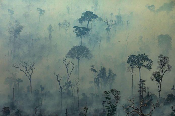 Terwijl veel aandacht uitgaat naar het coronavirus in Brazilië blijkt het aantal bosbranden in het Amazonegebied in de eerste maanden van dit jaar sterk toegenomen, zelfs vergeleken met het voor de natuur beroerde jaar 2019. Het een heeft met het ander te maken.
