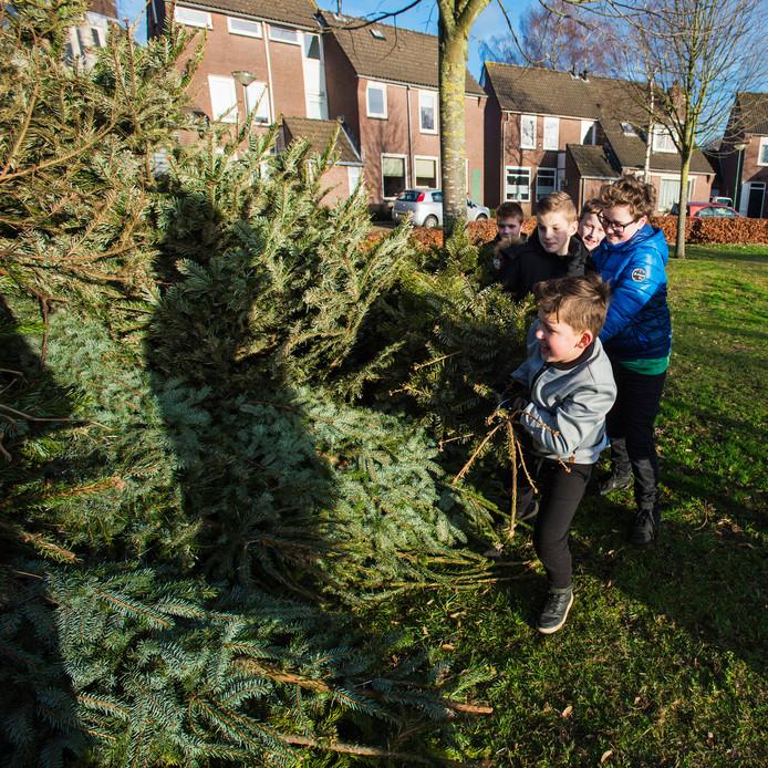 Deze jongens op de Leemkuilen in Kaatsheuvel waren vanmiddag druk met kerstbomen verzamelen.