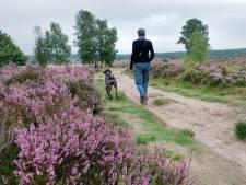 Wilde dieren in het nauw: Extra controle op loslopende honden op Rozendaalse Veld