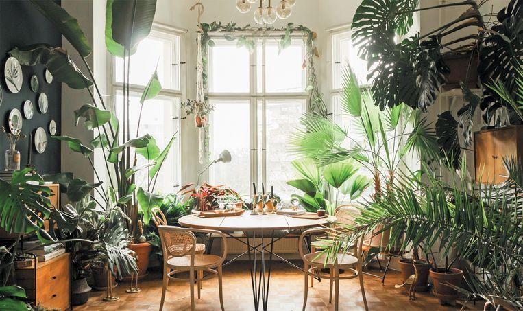 De creatie van een indoor jungle heeft meer voeten in de aarde dan zoveel mogelijk planten bijeenzetten. Beeld RV