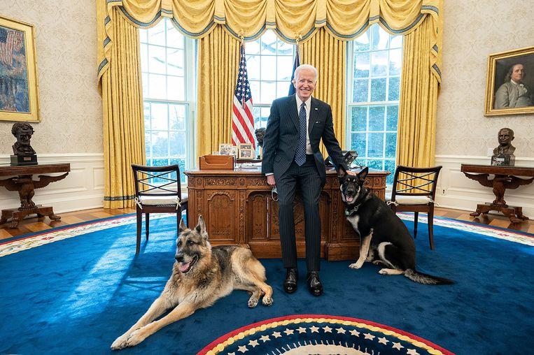 President Joe Biden met zijn honden Champ en Major in de Oval Office, in februari dit jaar.  Beeld Adam Schultz / The white house
