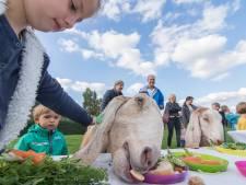 Kinderboerderij Houten failliet: 'Er is nog nét genoeg geld voor een laatste week vers voer'
