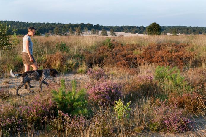 Het Rozendaalse Veld, een geliefd terrein bij wandelaars, fietsers, hardlopers, liefhebbers van zweefvliegtuigjes en hondenuitlaters.