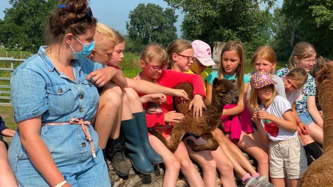 Boerderijkamp bij De Klaverlochting krijgt extra dimensie door geboorte alpaca