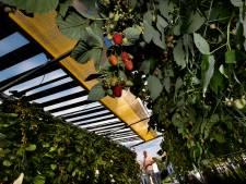 Excursie naar fruitteelt met dak van zonnepanelen overtuigt merendeel Astense politiek niet