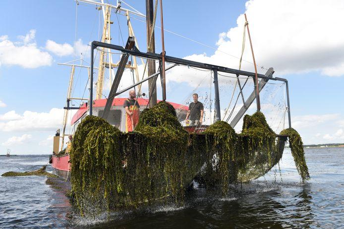 Het tijdrovende en dure maaien van het fonteinkruid op onder meer het Eemmeer blijkt niet de beste oplossing voor het probleem.