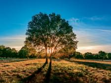 Raad Waale akkoord met plan voor landgoed met villa's en natuur aan Gildebosweg