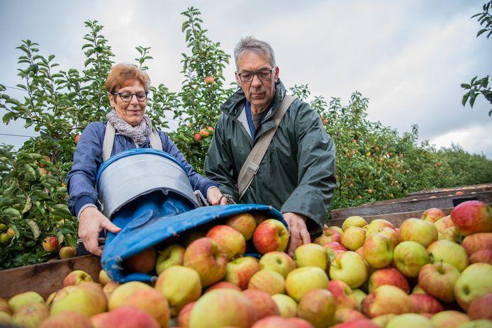 Herman en Magda Vereecken bezig met de oogst van de appels.
