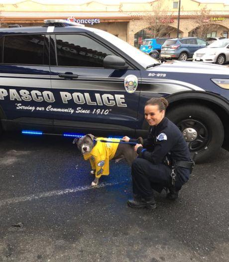 Zwerfpup met dodelijke tumor wordt politiehond: 'Eddie krijgt de beste zes maanden van zijn leven'