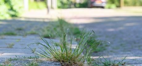 Gras en onkruid tieren welig in Hof van Twente, gemeente maakt van nood een deugd