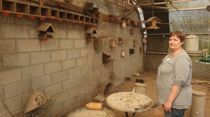 """Dieven roofden al 85 kanaries uit volières in Tongerlo: """"Die vogels hadden een emotionele waarde voor mij"""""""