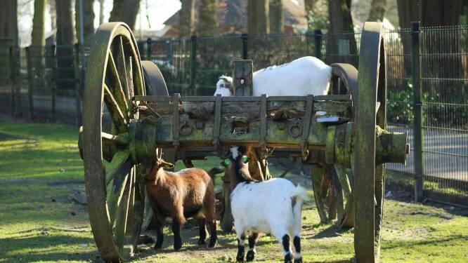 Kinderboerderij Rijssens Volkspark drie weken dicht, om asbest onder stoepen weg te halen