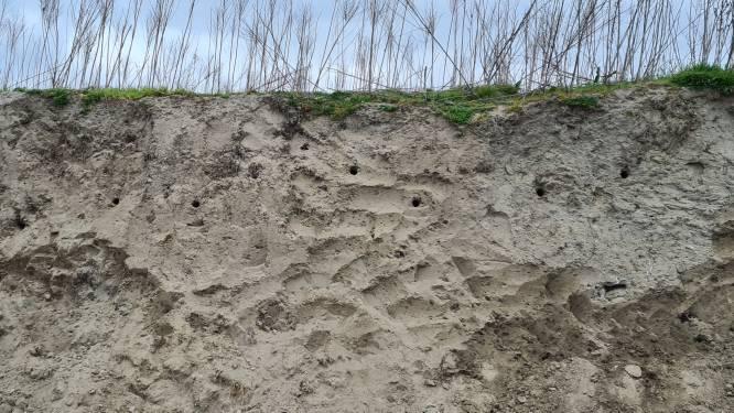 Zandgroeve Kerkom wordt natuurgebied