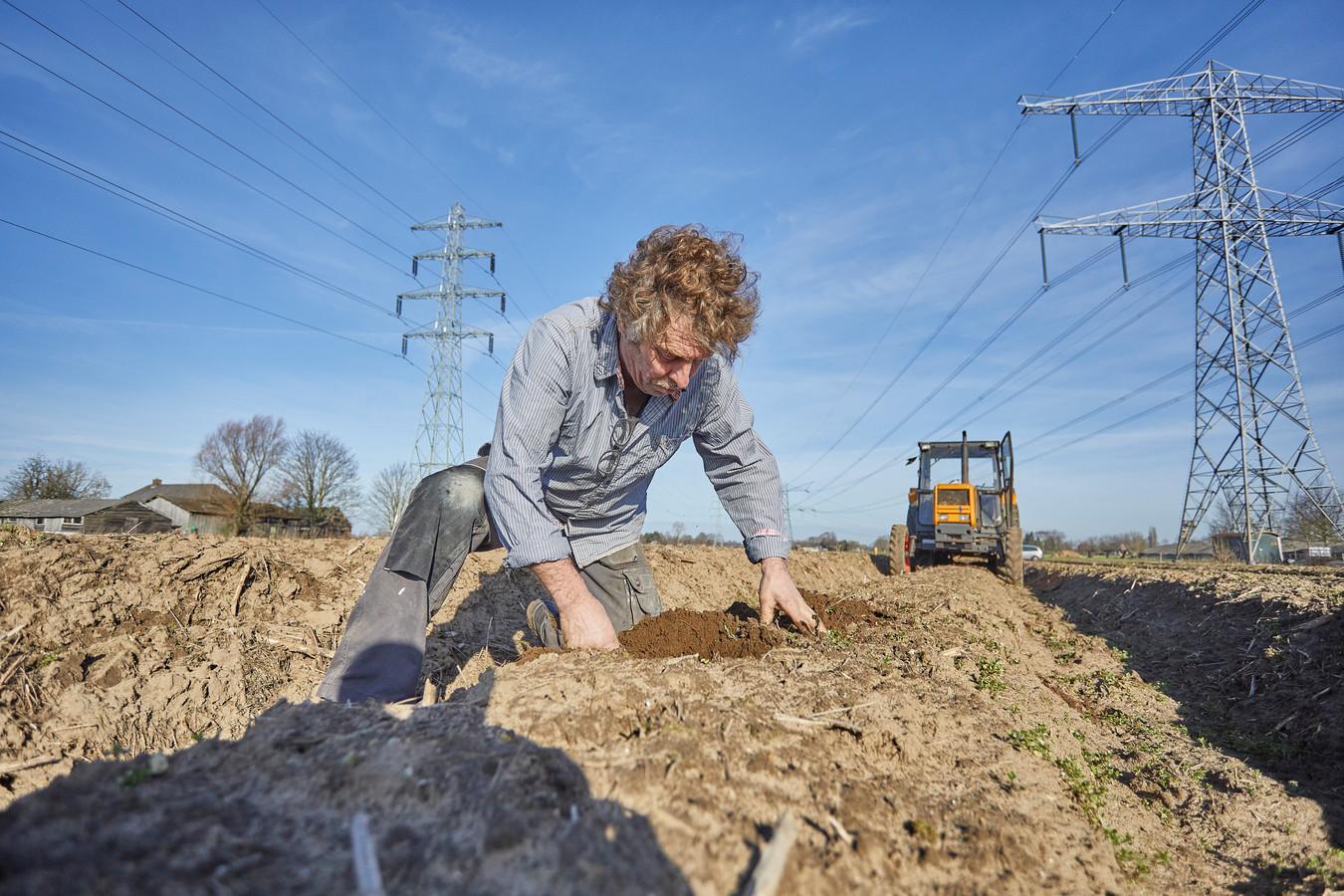 Aspergeboeren berijden zich voor, de vroege lente heeft ingezet. Zo ook aspergeteler Herman Eskes uit Vierakker. Hij controleert de groei van de asperges en rijdt met zijn trekker de ruggen nogmaals aan.