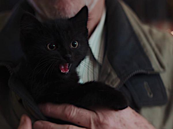 Frummel blijft als laatste van zijn nestje over. Maar als hij dan geadopteerd wordt, blijken zwarte katten niet altijd ongeluk te brengen.