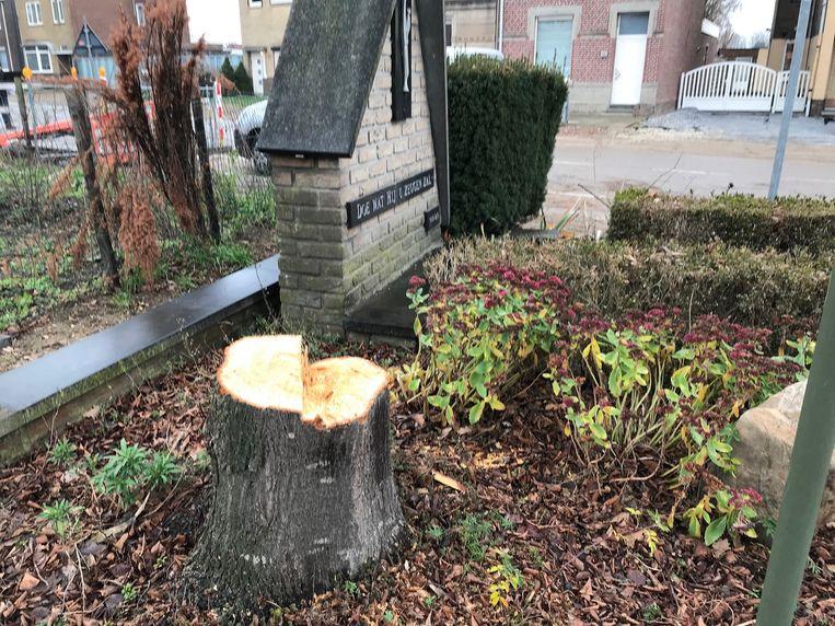 De lindeboom werd 30 jaar geleden door de buurt geplant. Er komt nu een nieuwe.