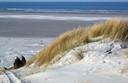 Duinen en strand van Vlieland.