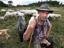 Herder Jan Crets vreest voor zijn schapen: 'Wolf had in Duitsland moeten blijven'