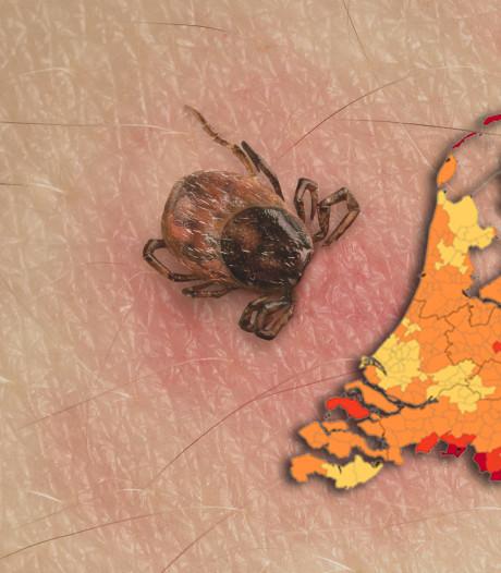 Ziekte van Lyme komt vaak voor in Oost-Nederland