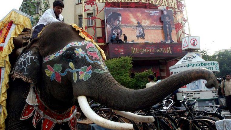 Een olifant op straat in Mumbai. Beeld epa