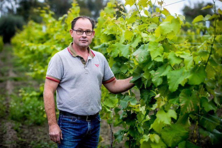 Marino Moenaert bij zijn wijnranken.