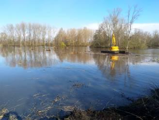 Drijvende kraan hapt riet uit Nieuwdonk