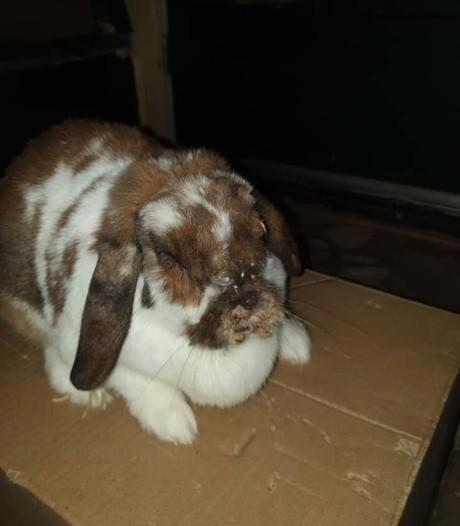 Bert (66) ziet vader en zoontje in het donker doodziek konijn dumpen in Deil: 'Schofterig'