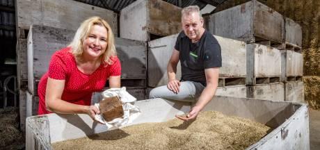 Roggebrood als nieuw lokaal product in Brummen: 10 ton rogge maakt 12.000 broden