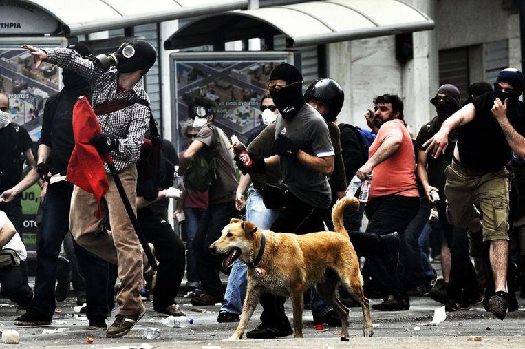 Loukanikos in mei 2010, in Athene. © AFP Beeld