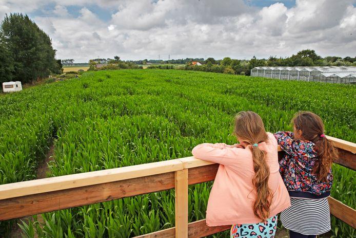 Vriendinnetjes Anne (links) en Elin bestuderen op het uitkijkpunt de route van het maïsdoolhof. Foto John de Pater