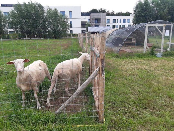 De kinderboerderij bevindt zich in de achtertuin van het woonzorgcentrum.