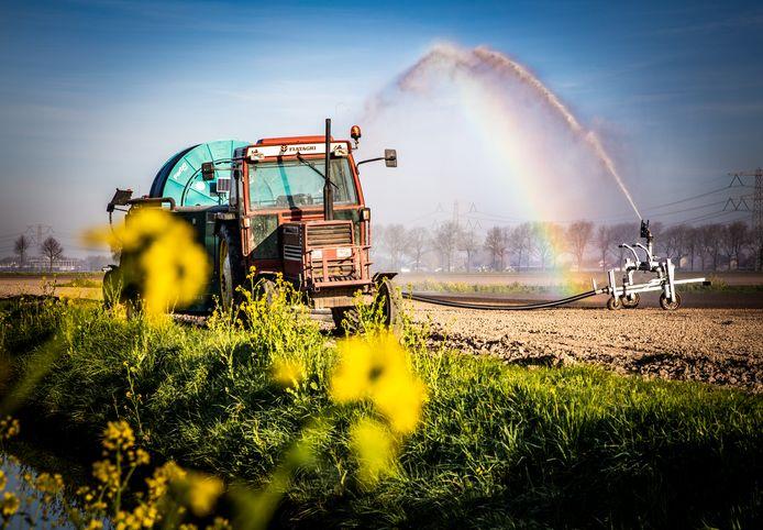De landbouwsector zorgt voor veel werkgelegenheid in de Hoeksche Waard.