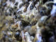 Gilde wil 'voedselbank' voor bijen
