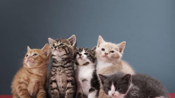 Goed nieuws: u zal geen hersentumor krijgen door uw kat