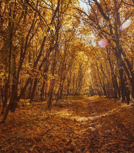 De herfst is begonnen: stuur hier jouw mooiste foto in