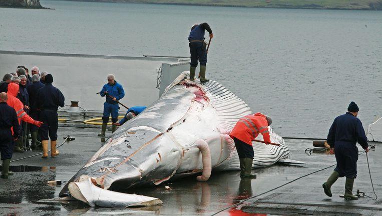 Een walvis wordt geslacht aan boord van een walvisjager. Beeld EPA