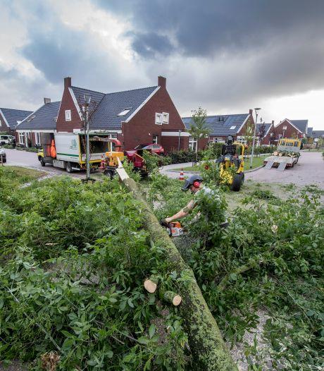 Buurt gerustgesteld: Thius laat niet álle bomen weghalen bij huis Lienden maar slechts twee