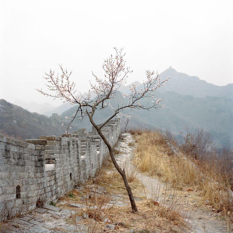 Uit 'Watering My Horse' (2020), uitgegeven door The Eriskay Connection  Beeld Xiaoxiao Xu