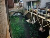 Een 'nieuw' stukje Binnendieze te zien in Den Bosch: De Doode Stroom is tot leven gewekt