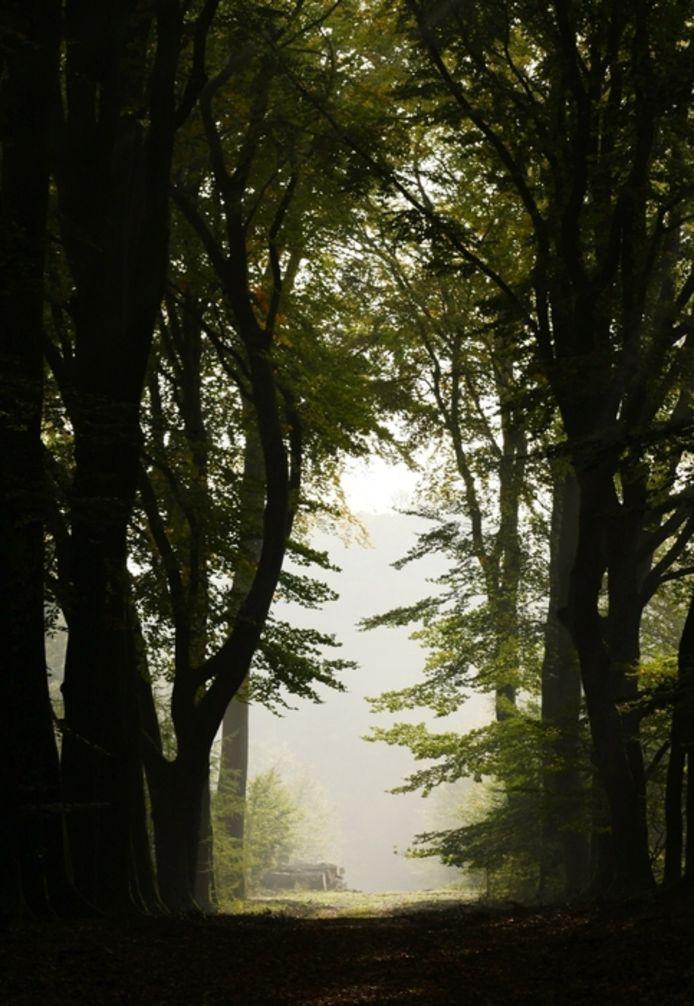 Mieke Verbunt uit Doesburg maakte deze foto op een een mistige zondagochtend in het bos vlak voordat de zon doorbrak.