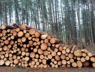 """Stad verschaft duidelijkheid over kappingswerken in Bel en Ten Aard: """"Meer ruimte en licht voor geselecteerde bomen zodat ze dikker kunnen worden"""""""