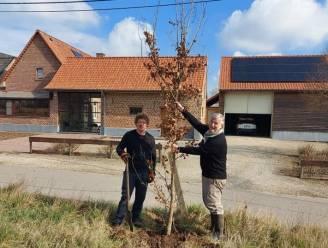 """Spontane boomplantactie langs Landries: """"Iemand had vijftig boompjes over en die hebben we verdeeld"""""""