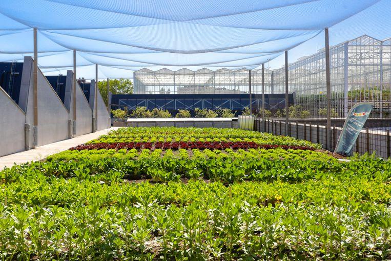 De buitentuin naast de serres van Ferme Abattoir wordt bewerkt door Bel Akker, het stadslandbouwproject van Atelier Groot Eiland, met een ploeg mensen in arbeidszorg. Beeld BIGH