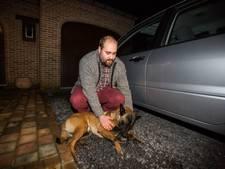 Tienduizenden ondertekenen petitie om Belgische bijthond Uscko te redden